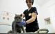 Коронавирус и животные: инфекция не передается от животного человеку и наоборот