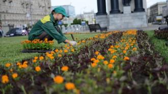 На территории «Лужников» появится сад-розарий. Фото: архив