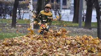 Осенний ковер в твоем дворе: быть или не быть? Фото: архив