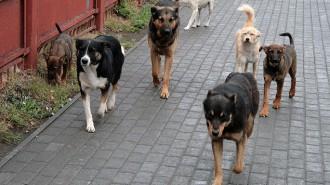 К депутатам Совета депутатов обратились жители по поводу бездомных собак