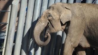 Конкурс на выбор имен для слонят из Мьянмы стартует 26 декабря. Фото: архив