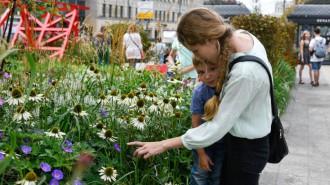 Конкурс любительских цветников охватит 1475 площадок по всей Москве. Фото: архив