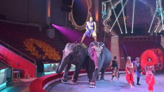 Цирк на Цветном бульваре оштрафуют за нарушения антиковидных мер. Фото: архив